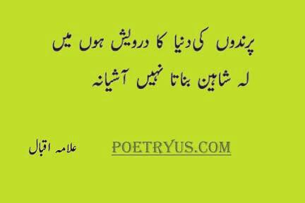 shaheen shayari allama iqbal